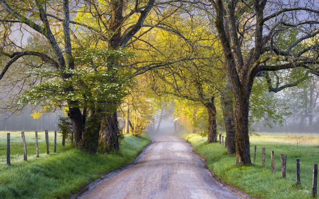 10 Things to Do in Cades Cove TN