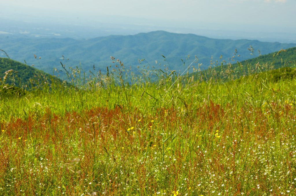 Smoky Mountain Wildflowers
