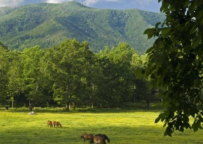 Horses, Cades Cove, Great Smoky Mtns Nat Park, TN
